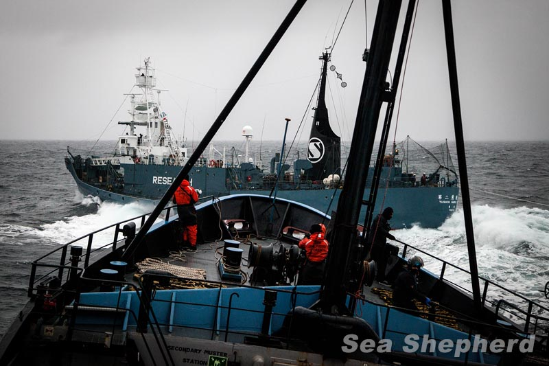 Protesters Under Attack from Japanese Whalers